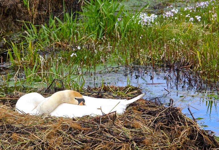 Sleeping Incubation - News of the week