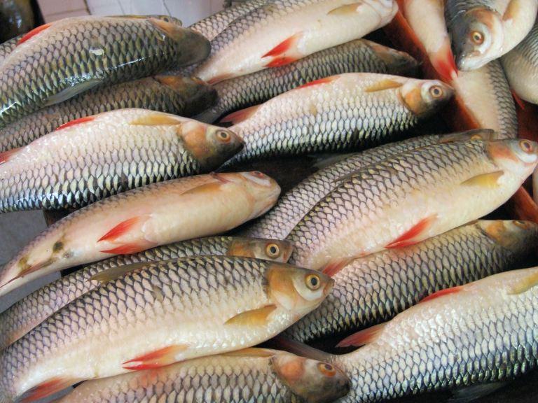 Fish in a Sarawak Market