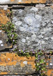 Stones and Purple Flowers