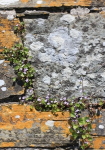 Stones and Purple Flowers