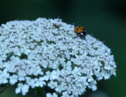 Wandering in the Nectar Fields