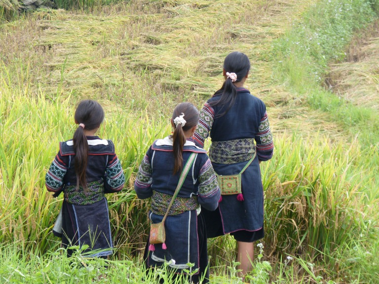 Black Hmong in the Fields