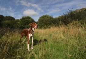 The Hound in the Quarry Clearing