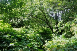 Green Quarry Thicket