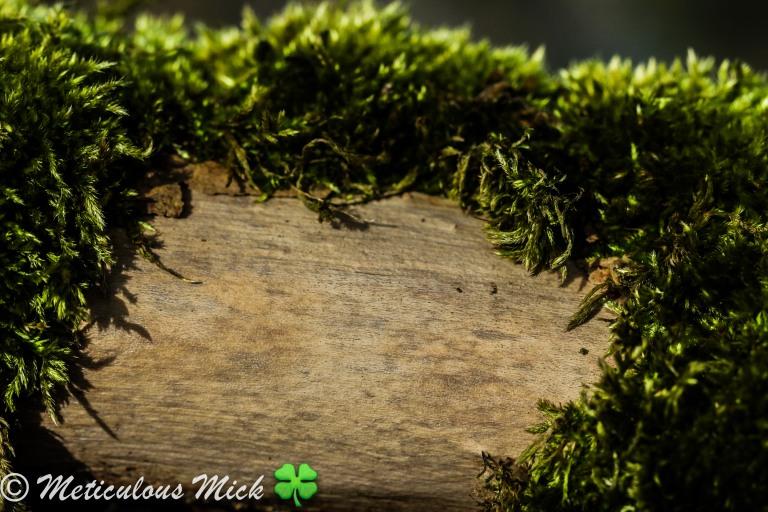 Coat of Moss