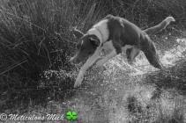 Splashing Around