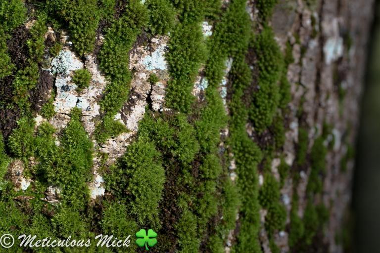 vert Moss