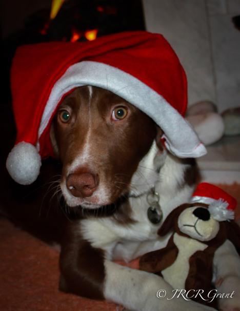 The Hound with Mini-Hound in Santa Mood