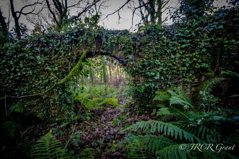Ivy Clad Arch