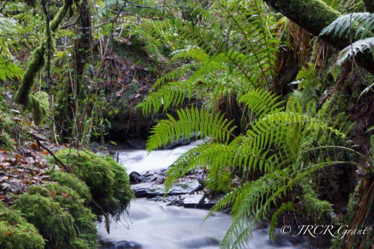 Wooded Stream