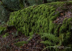 Moss Covered Wall