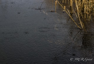 Spots of Rain