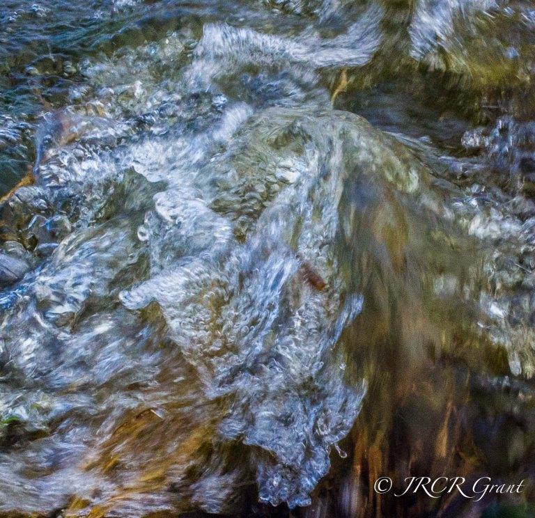 Dancing Bog Water