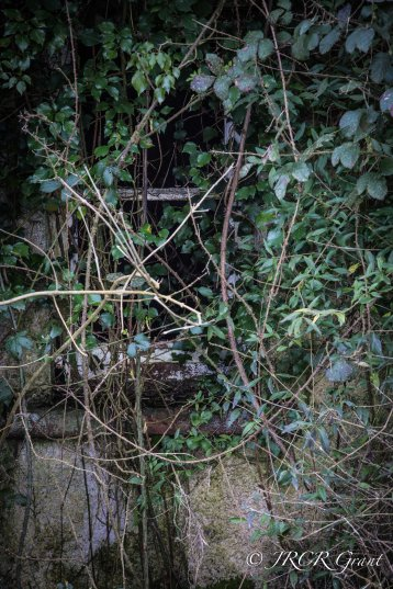 The Ivy Runneth Over
