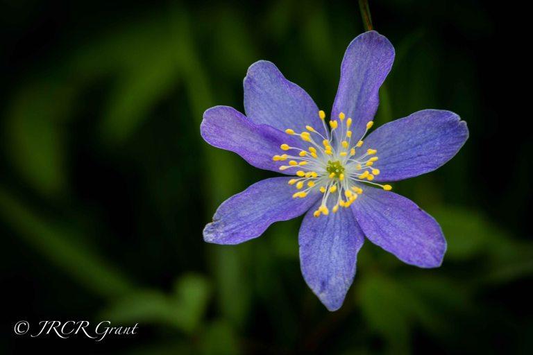 Blarney Spring II