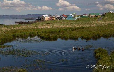Flatey Duck Pond