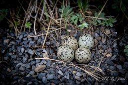 Nest on the Path