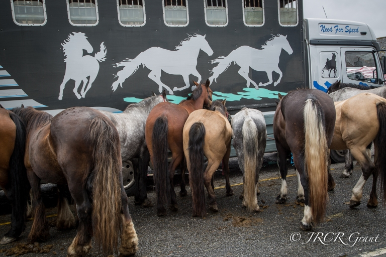 Horses in a row (1 of 2)