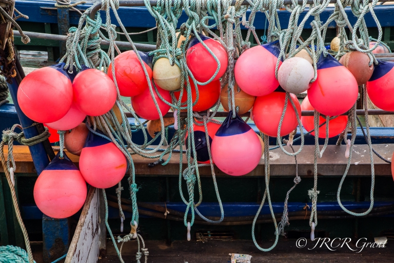 Colourful Bupys