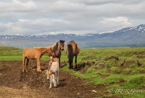 Image of Foals