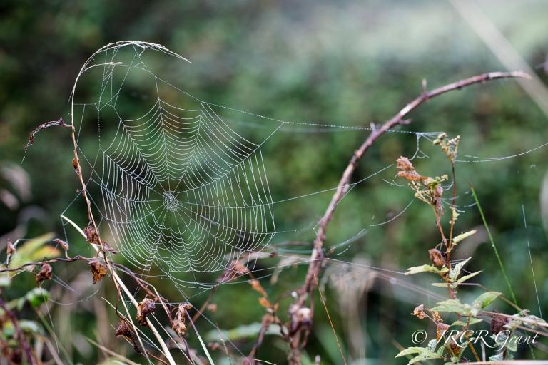Cobweb and brambles