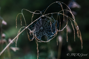 Web on a Wand