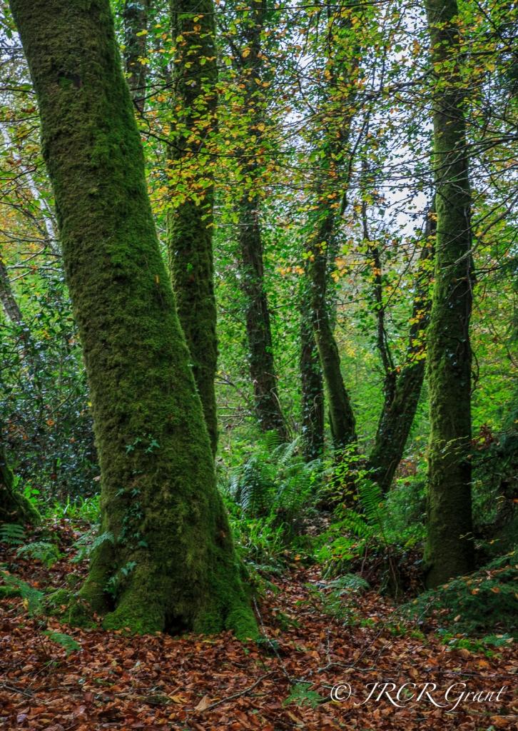 Glenbower Wood