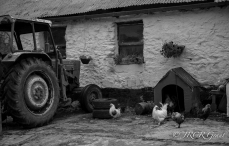 West Cork Farm