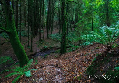 Stream flows through wooded forest