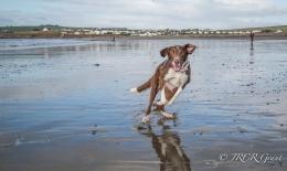 Dog having fun on the beach