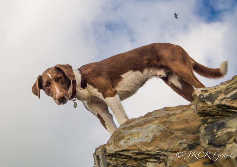 Dog looking down from rock