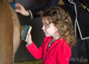 Image of Girl grooming pony