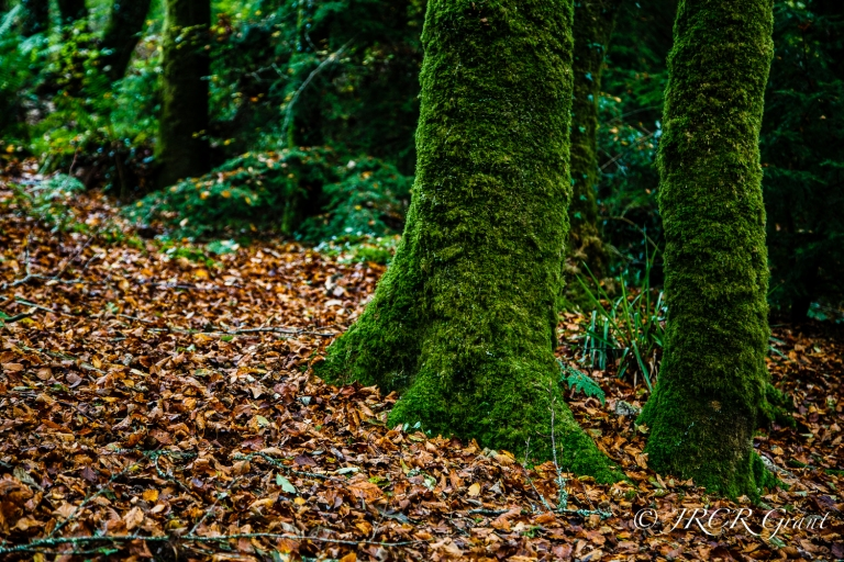 Forest Floor I
