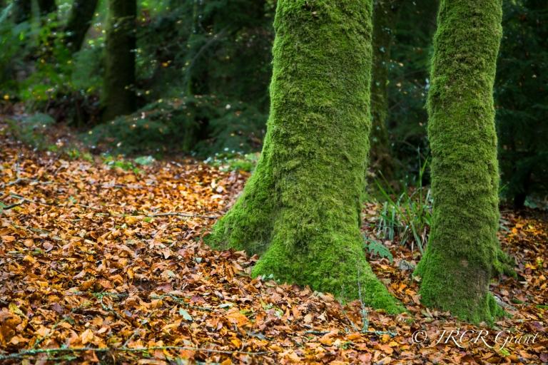 Autumn Wood - Version 2