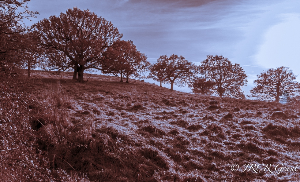 Trees looking cold