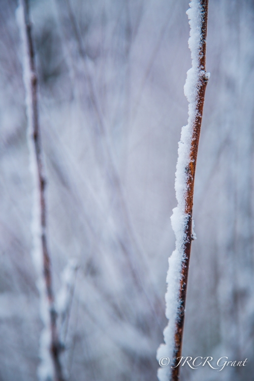 Image of stems on snow