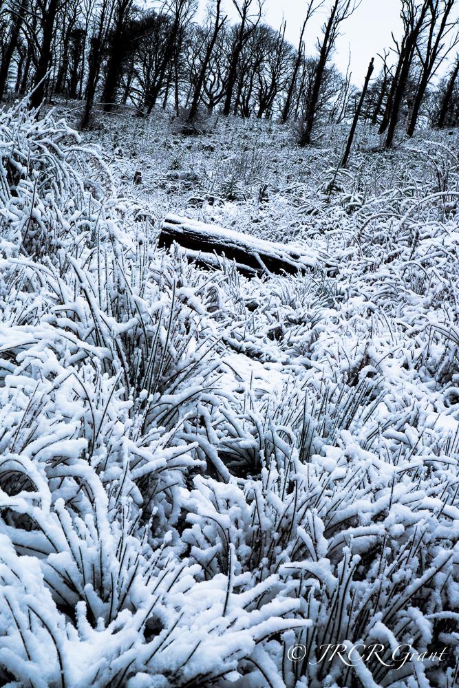 Snowy scene in Cork