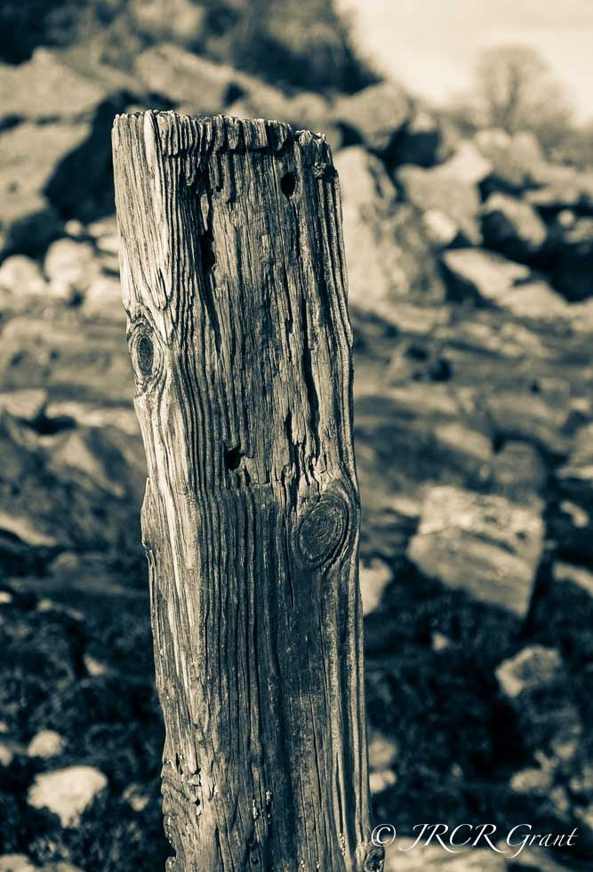 Wooden Pile Stands firm against the tide