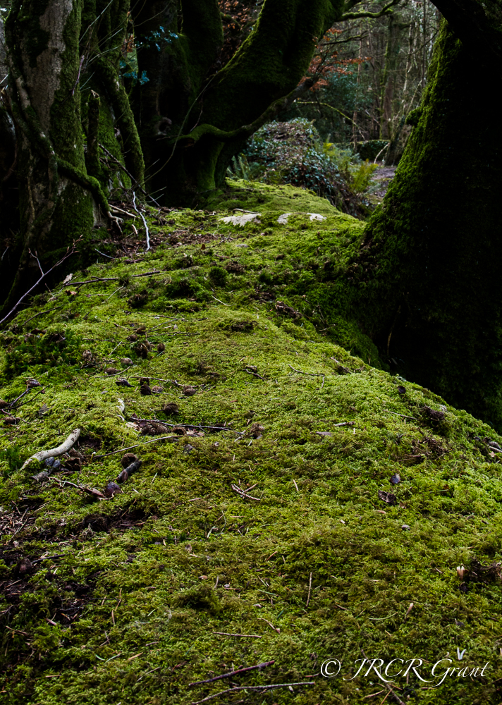 A Carpet of moss lines the top of an old wall.