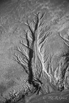 water channels in the sand forming the shape of a tree - an artistic image