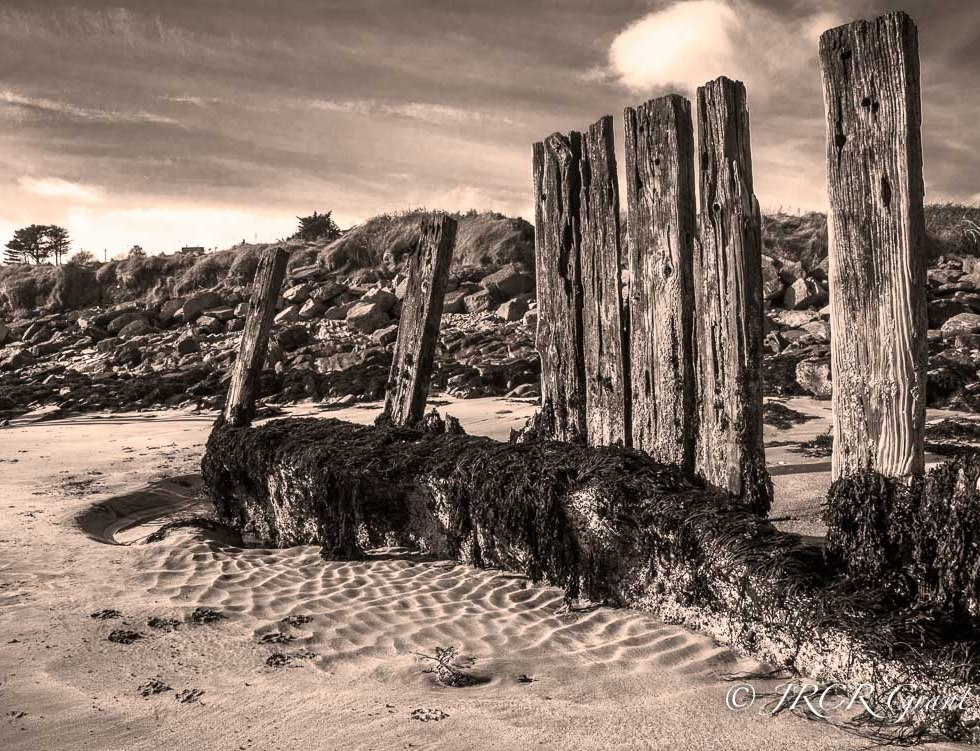 Old wooden harbour piles guarding the seashore