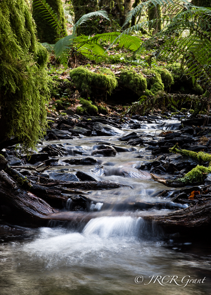 Wooded stream-1