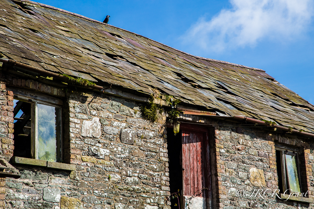 A lone croe stand on a barn roof,standing out against the azure sky.