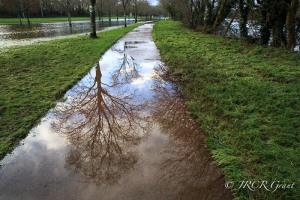 skeleton trees get reflected in a puddle