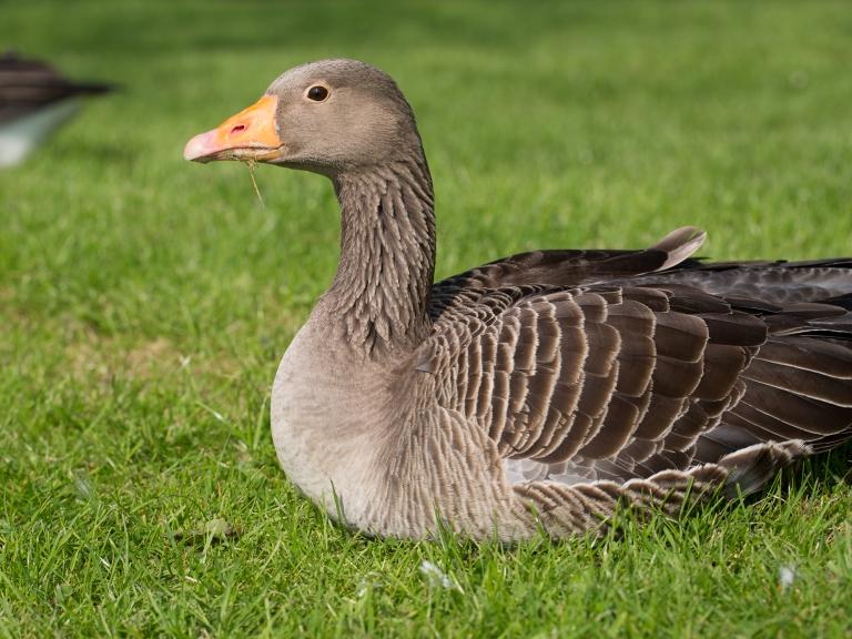 Lough_Goose-30
