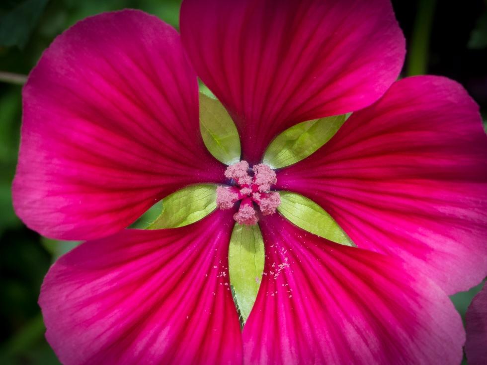 A garden flower brightens up the scene