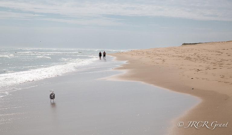 A silhouetted couple stroll along the Cape Cod Shoreline