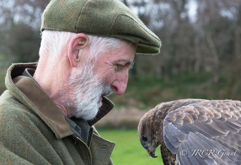 Falconer tends to a buzzard
