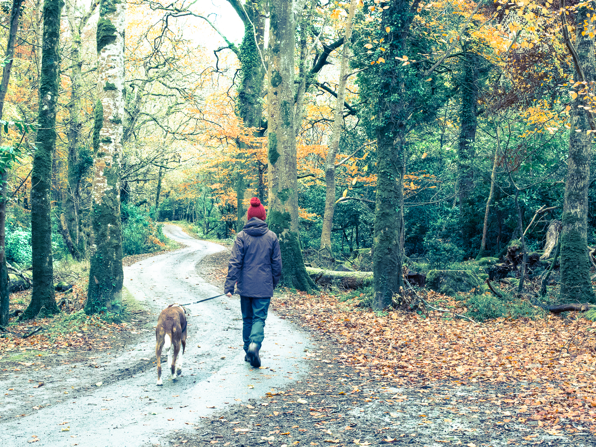 Walking the dog in Killarney National Park Park