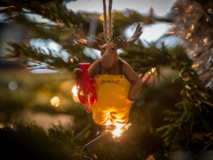 A Main Moose holds aloft a lobster as it hangs from the Christmas tree